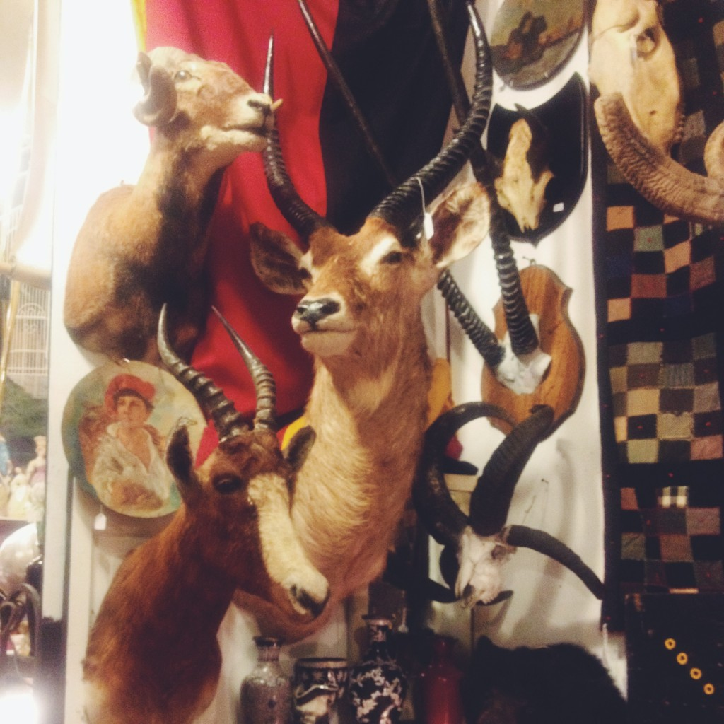 Original antlers at Uncommon Objects in Austin